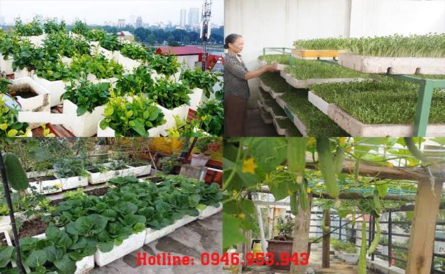 Lo thực phẩm bẩn, người dân Hà Nội mua thùng xốp về trồng rau sạch
