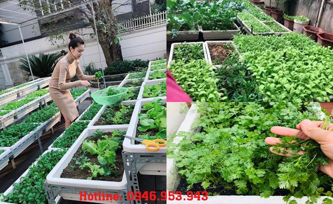 Thùng xốp trồng rau sân thượng