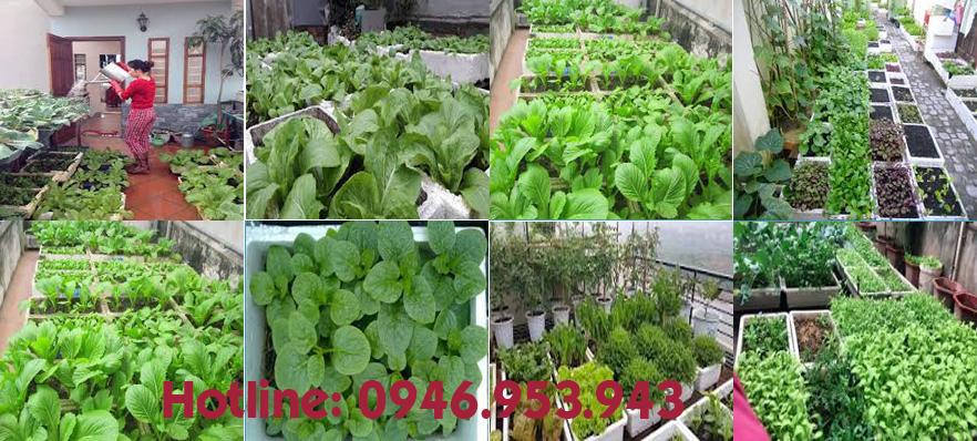Thùng xốp Hà Nội trồng rau