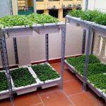 Thùng xốp trồng rau mua ở đâu đảm bảo chất lượng
