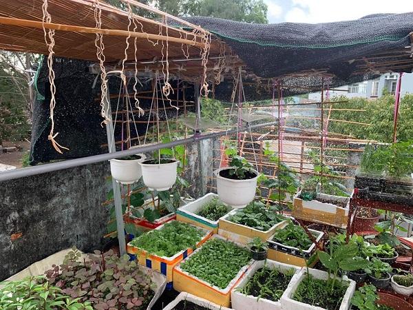 thùng xốp trồng cây
