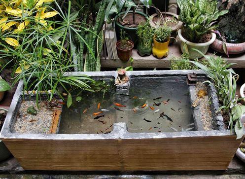 thùng xốp nuôi cá