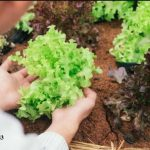 Những yêu cầu cần biết đối với thùng xốp trồng rau